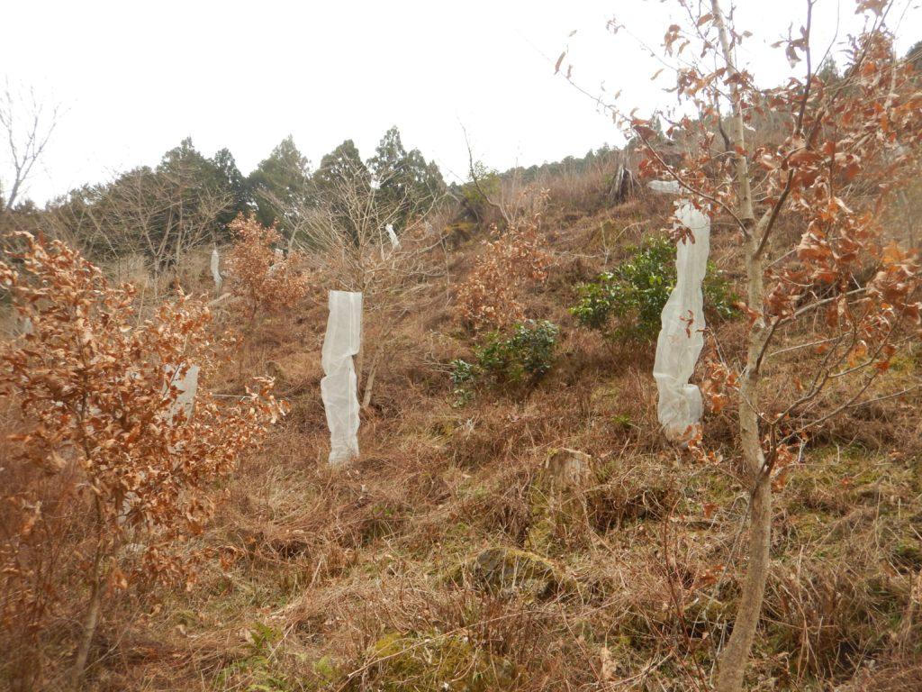 ドングリがなる樹々
