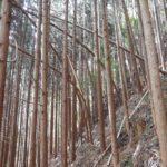 手入れ不足の人工林は?