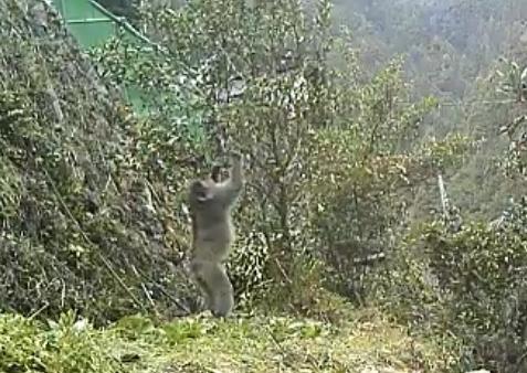キンカンを食べる猿