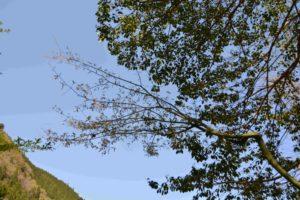 瓜楓の遠景