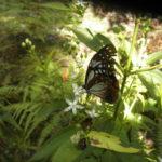 花にとまる蝶たち