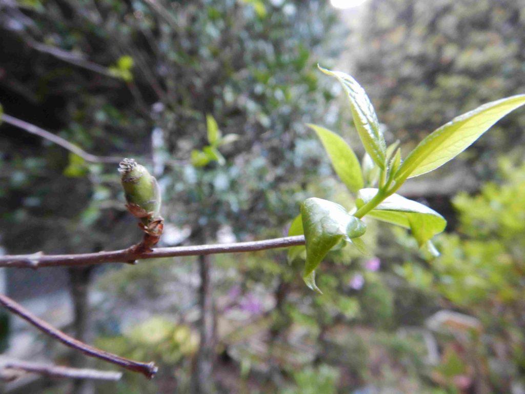 新緑の出現(4月18日)