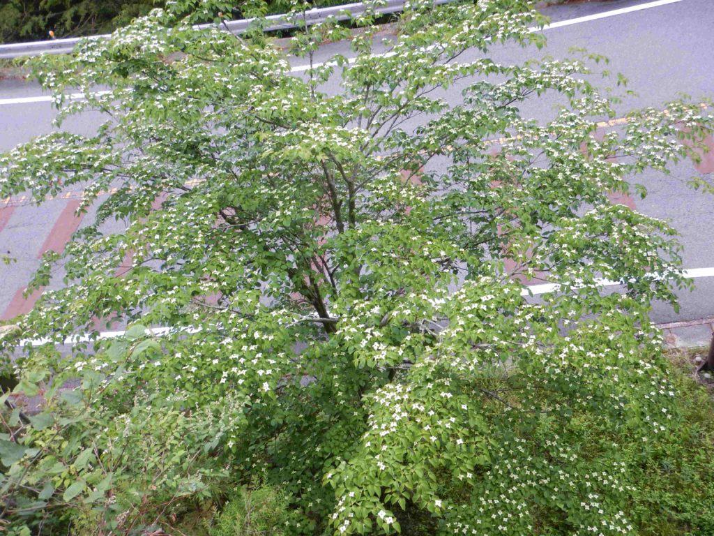 樹の上から見た花々