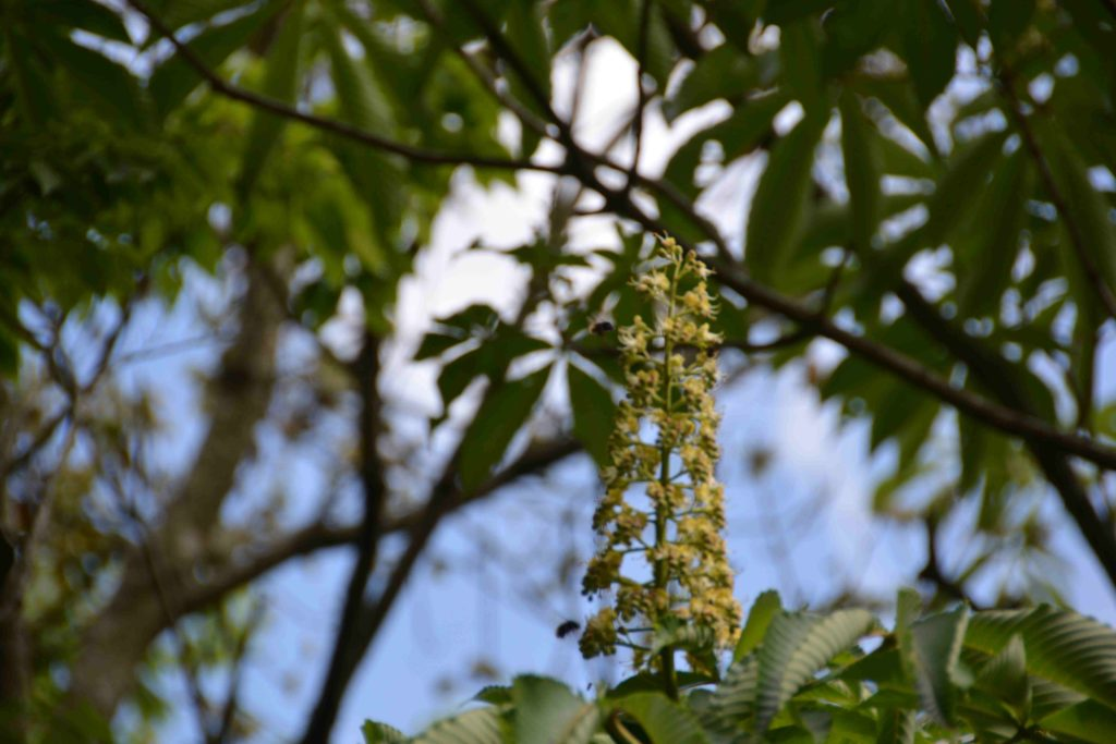 花と蜜に集まるハチ