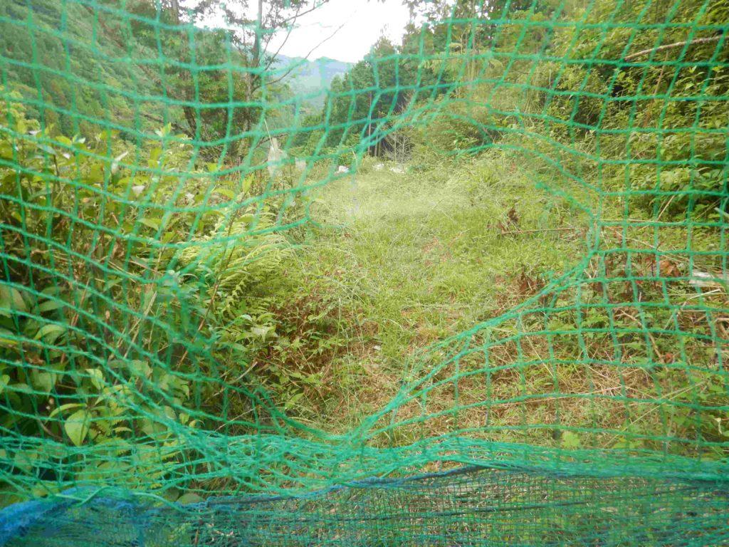鹿に破られた網