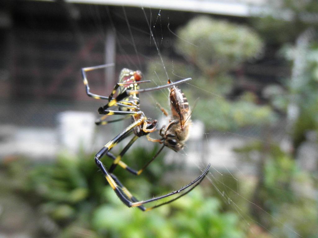 襲いかかる蜘蛛