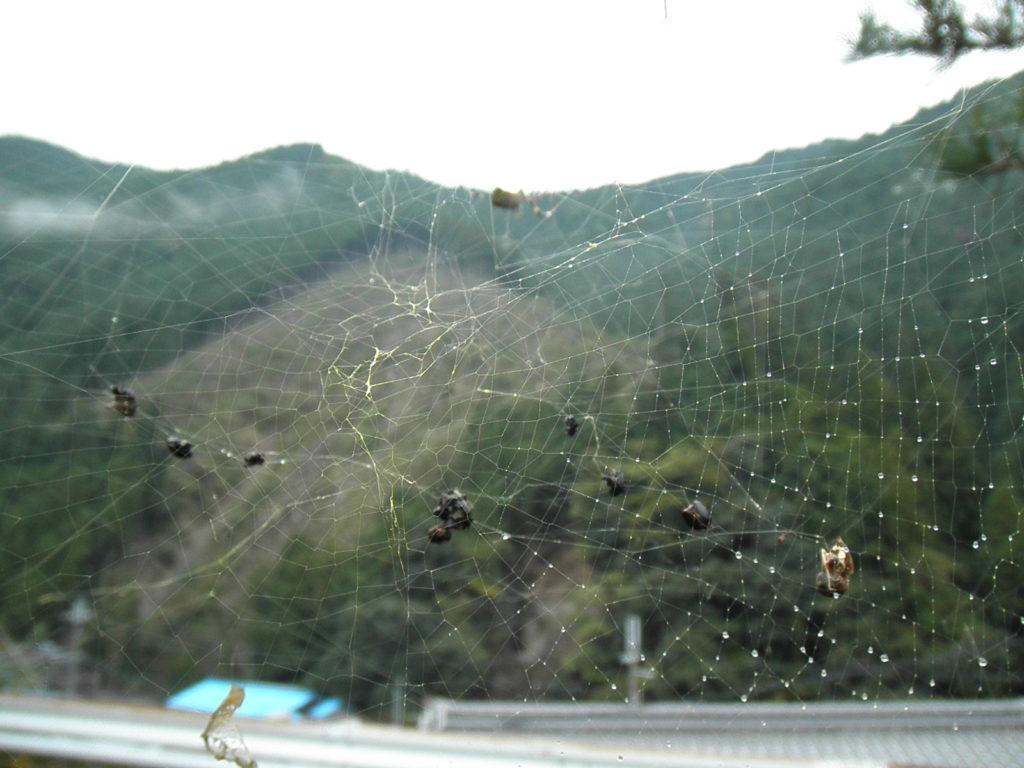 その後の蜘蛛の巣