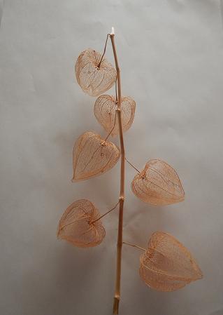 枝つき透かしホウズキ