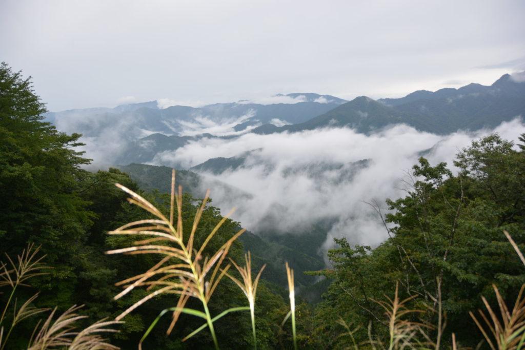山のススキ