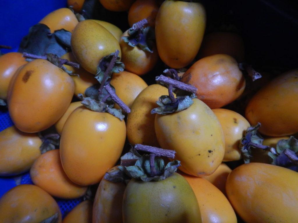 皮を剥く前の柿
