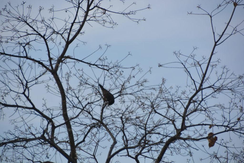 一心不乱に実を食べる鳥