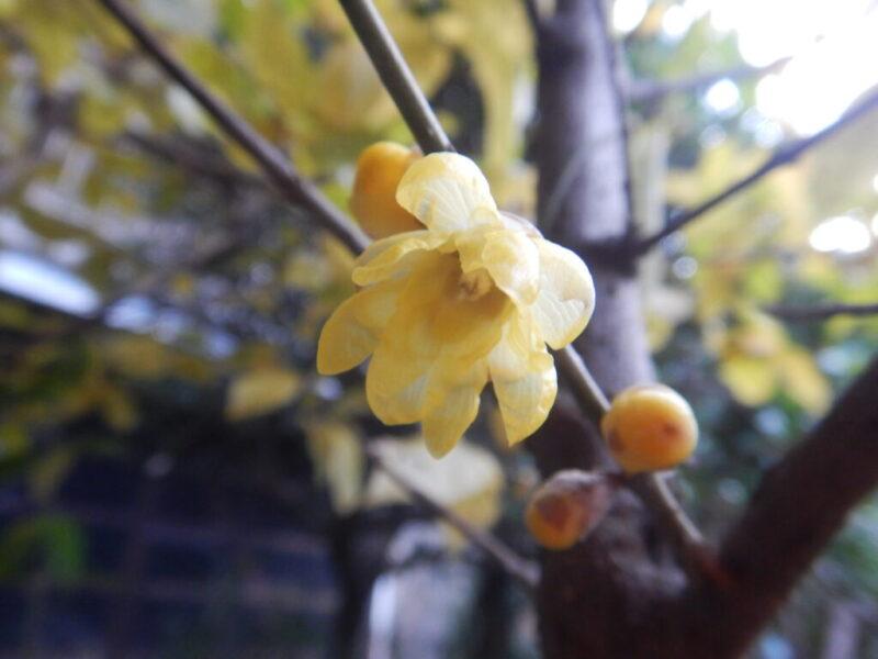 淑やかに咲いた花(1月1日)