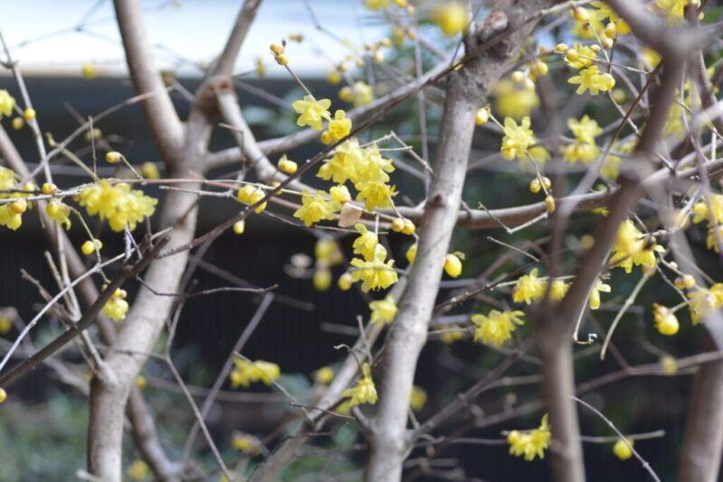 咲いた花(1月1日)