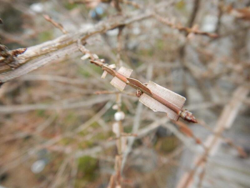 枝についた翼
