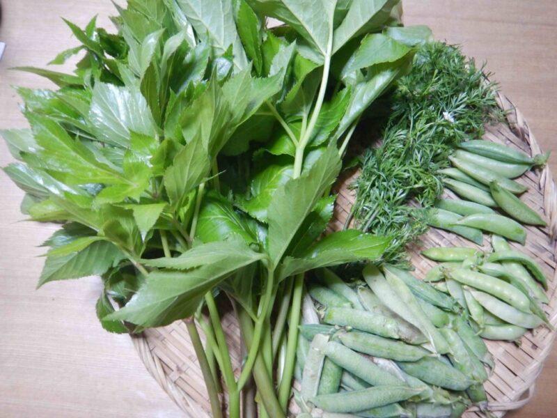 5月に採った野菜